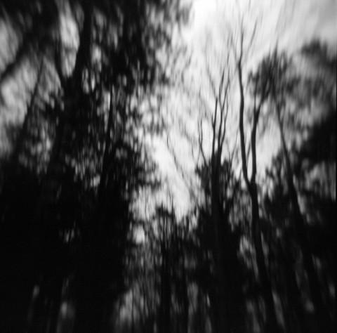 Moving trees Heiloo (Landmarking), 2010